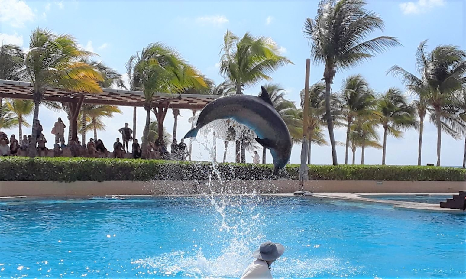 Dolphins in the pool -1